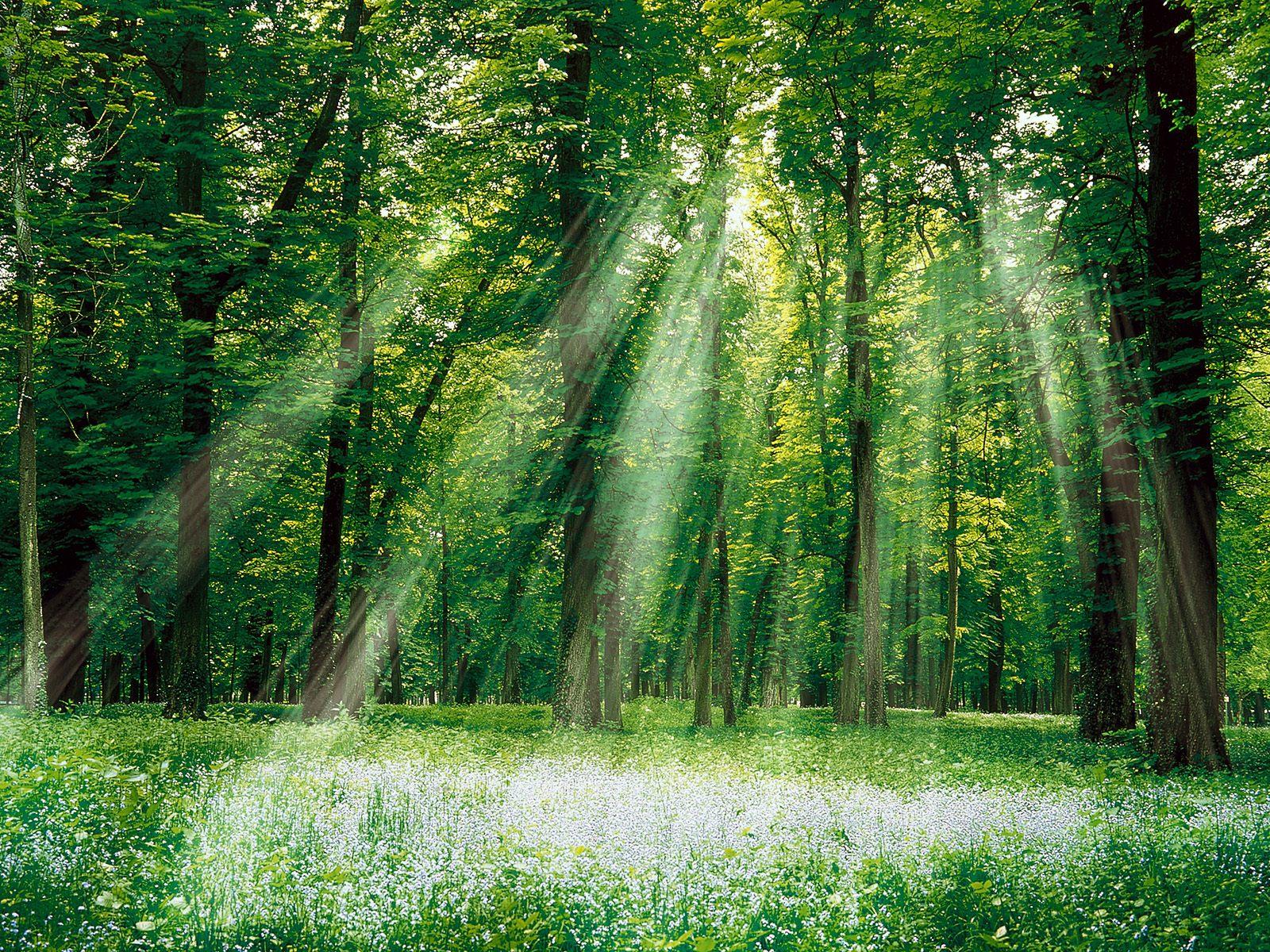 Ancora su OpenForeste …